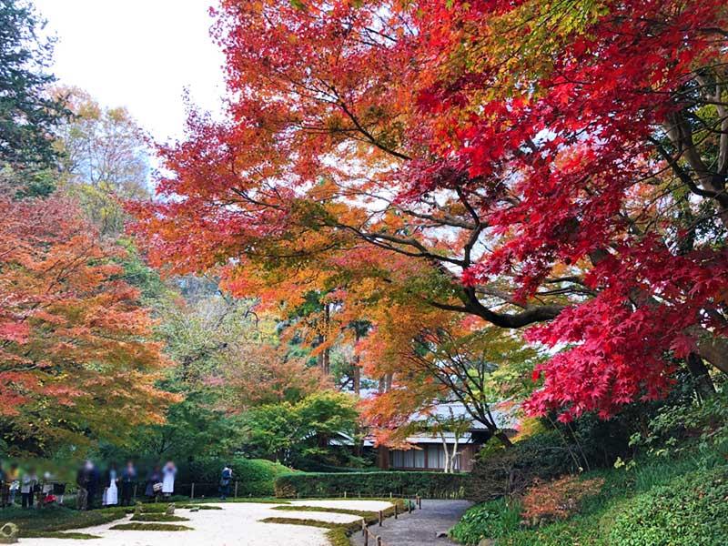 丸窓の向こう側の庭園も紅葉がきれい