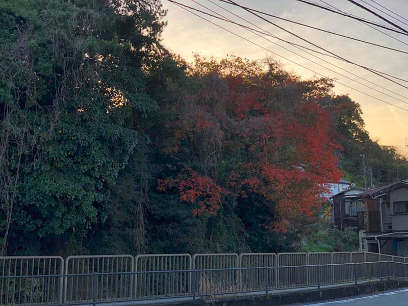 付近の木々は紅葉の盛りを迎えている