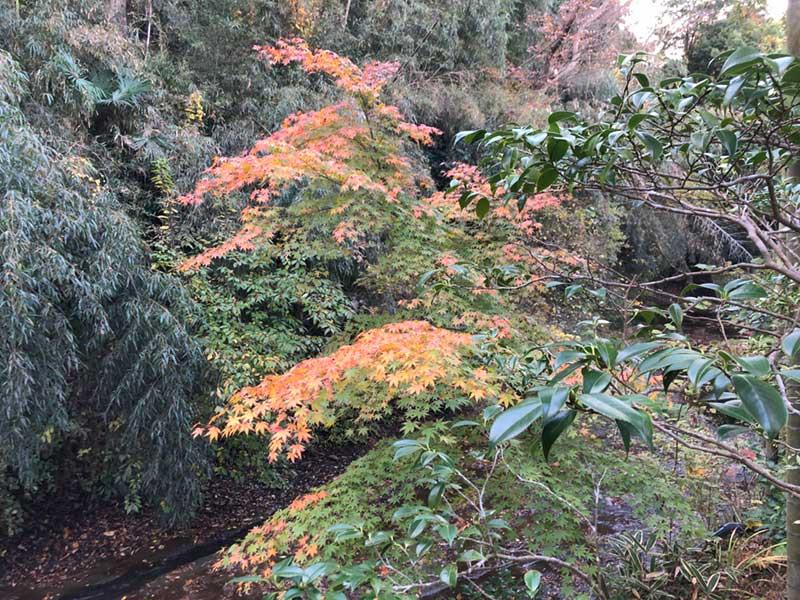 岩と川と紅葉に囲まれて