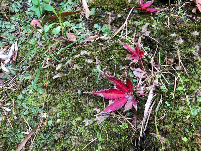 紅葉の赤色に合わせた装い