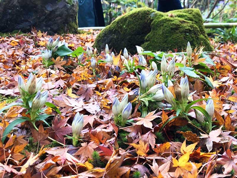 散った落ち葉もまた綺麗
