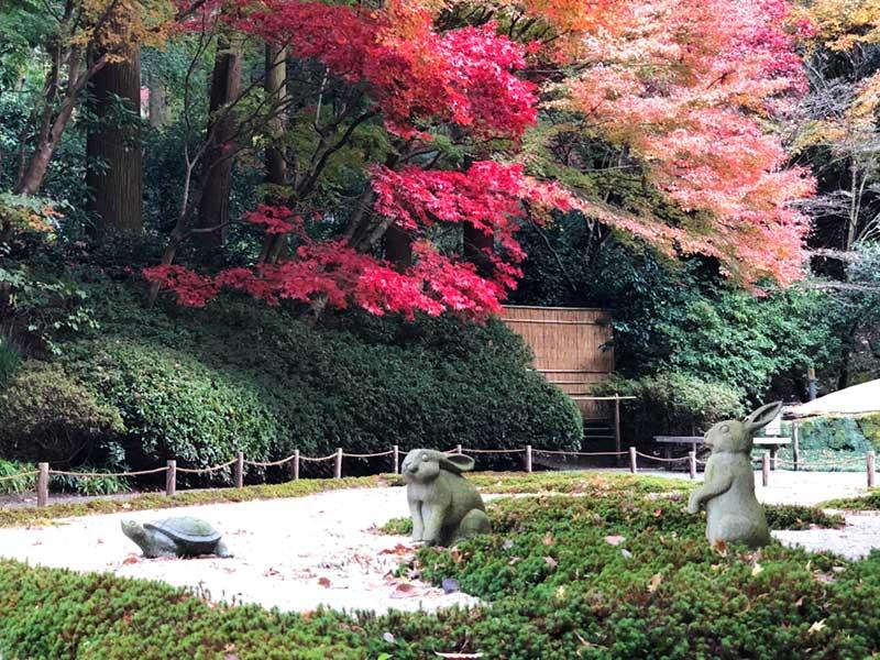うさぎと亀と赤い紅葉