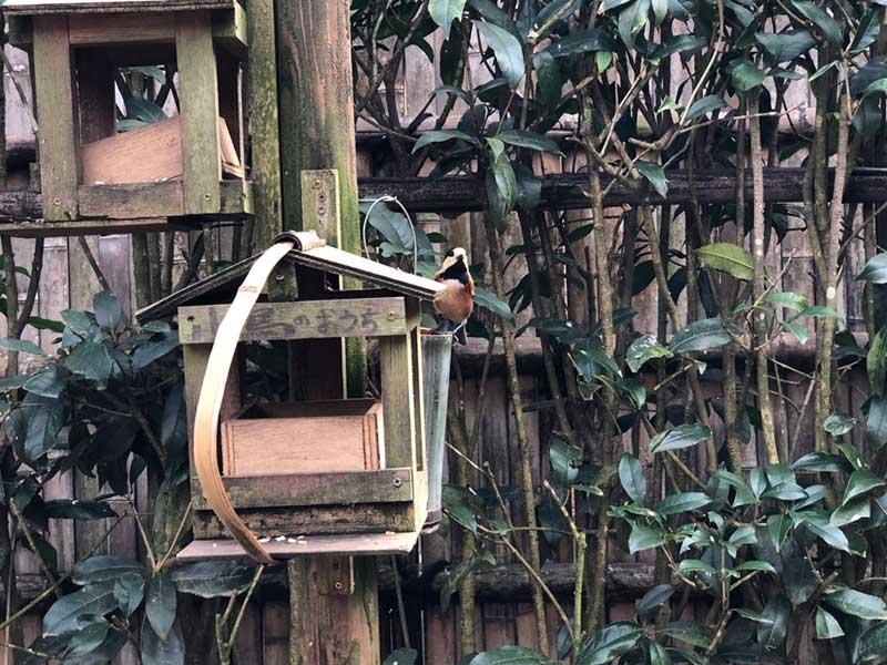 巣箱に小鳥がやってきた