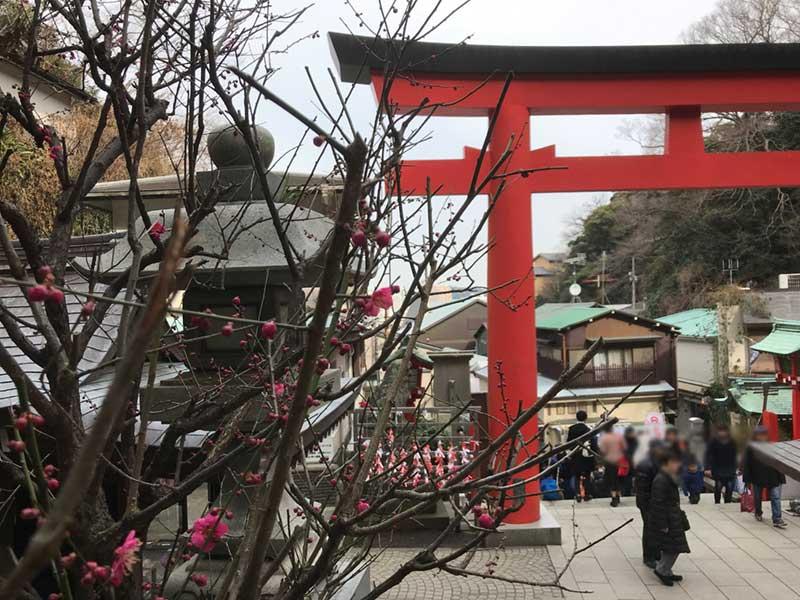 江島神社の朱の鳥居と梅の花