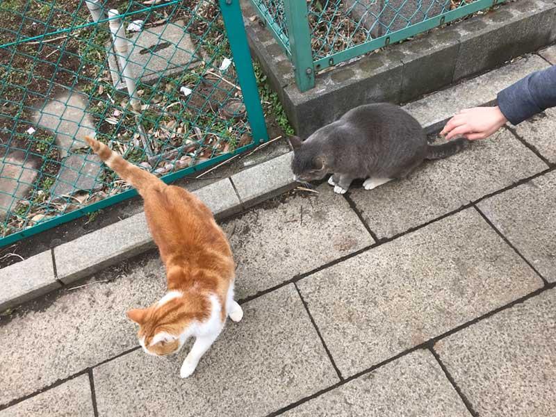 江ノ島は猫がいっぱい