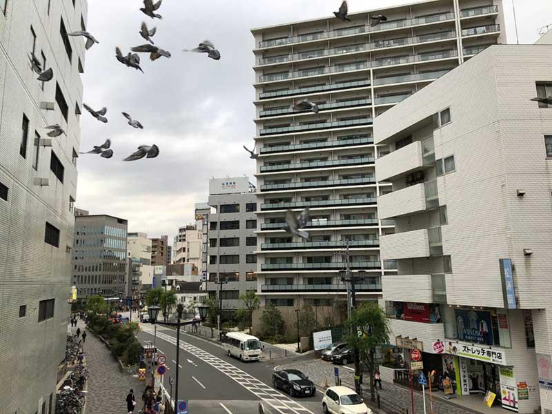 鳩が舞う藤沢駅北口のビル群