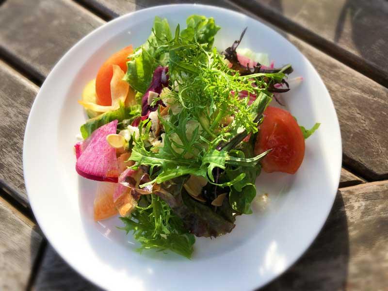 新鮮野菜の綺麗なサラダ