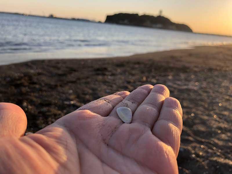 浜辺で拾った本物の桜貝