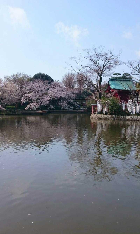 弁財天と桜