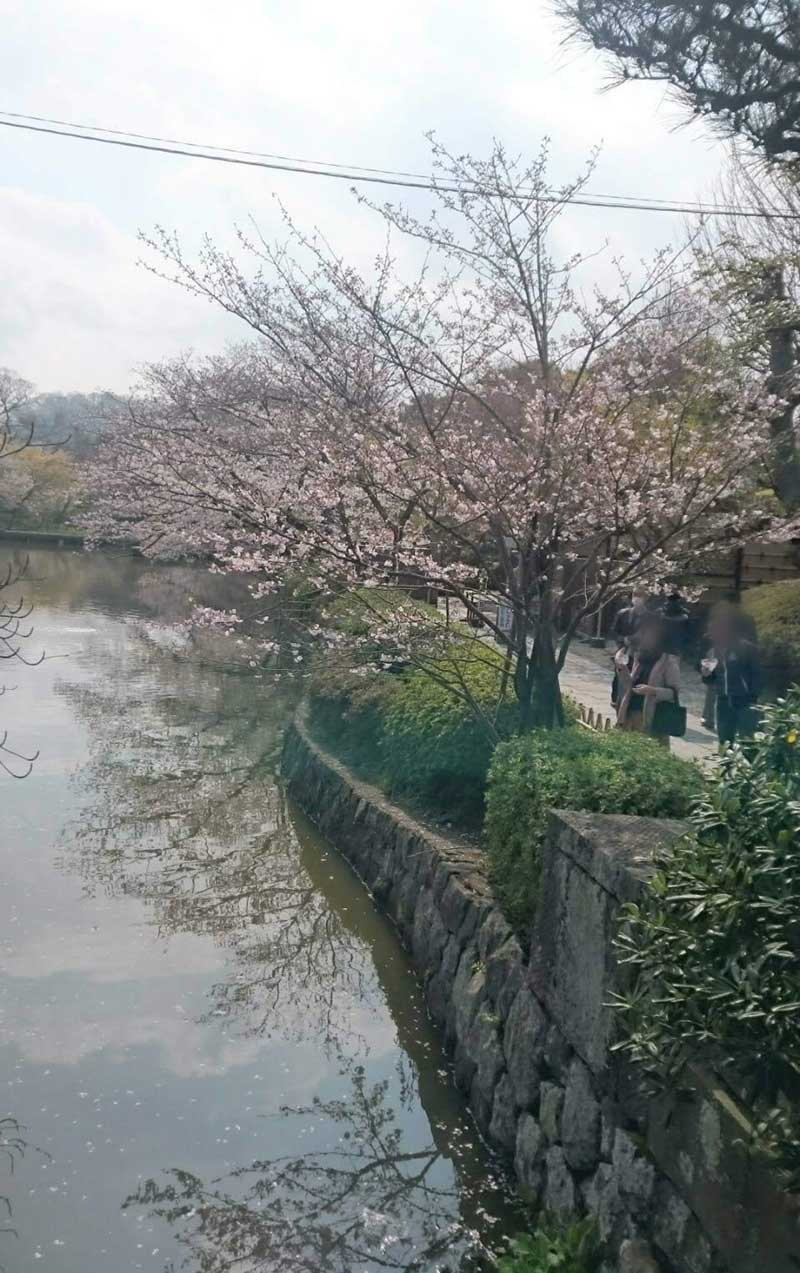 このあたりの桜も見頃です
