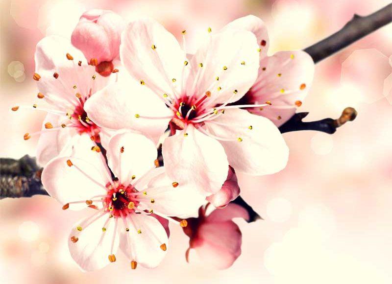 【春休みから会員制自習室で勉強習慣をつけよう!】3月は平塚の新受験生・浪人生の入会が増えています