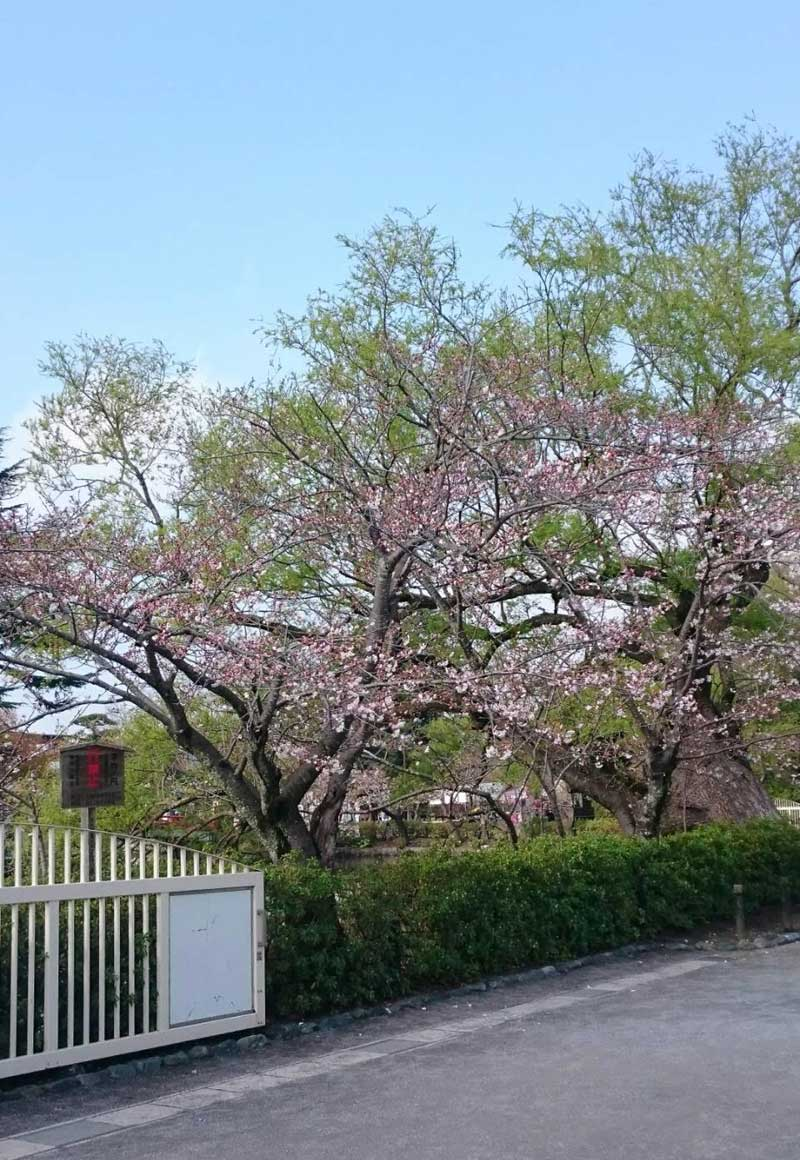 鎌倉に春の到来です