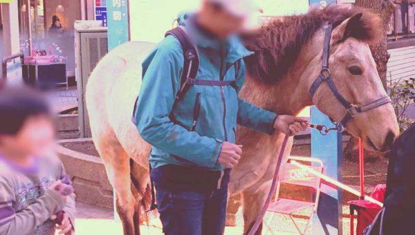 【平塚まちかどホースセラピー】平塚駅前に馬がやってきた!道産子との触れ合いに癒されます