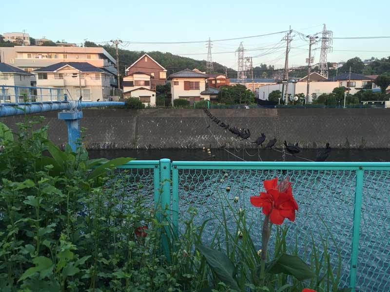 江ノ島へ流れる境川沿いの高級住宅街
