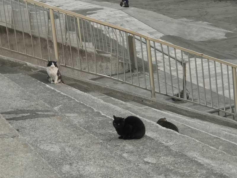 夕方になると猫が集まってくる