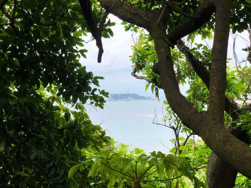 木々の間から覗く江ノ島が最高