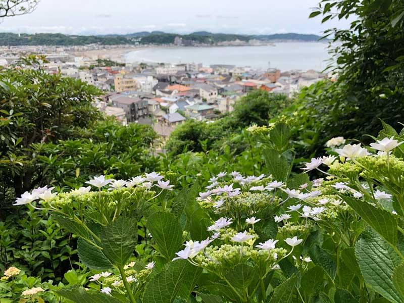 鎌倉の海とあじさい