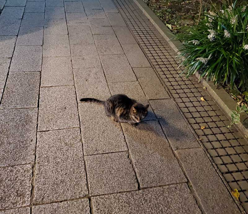江ノ島では猫に頻繁に遭遇します