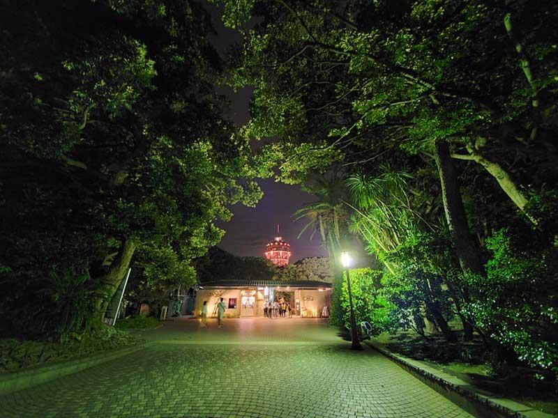 江ノ島タワーが見えてきた