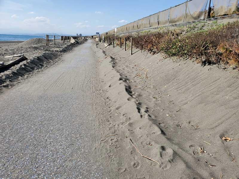 所々砂が堆積している