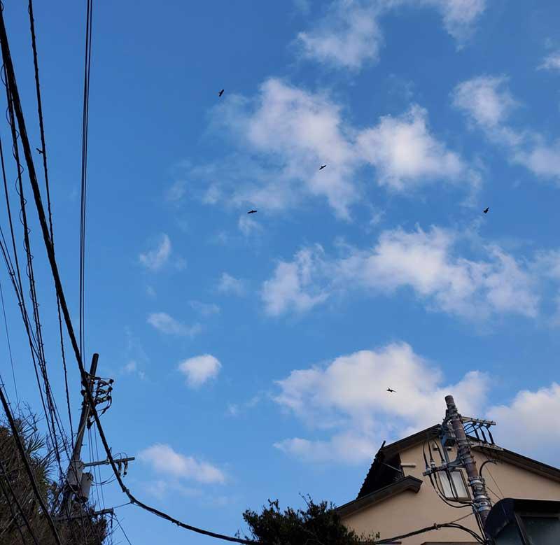 上空にはトンビがうようよいるので食べ歩きは注意!