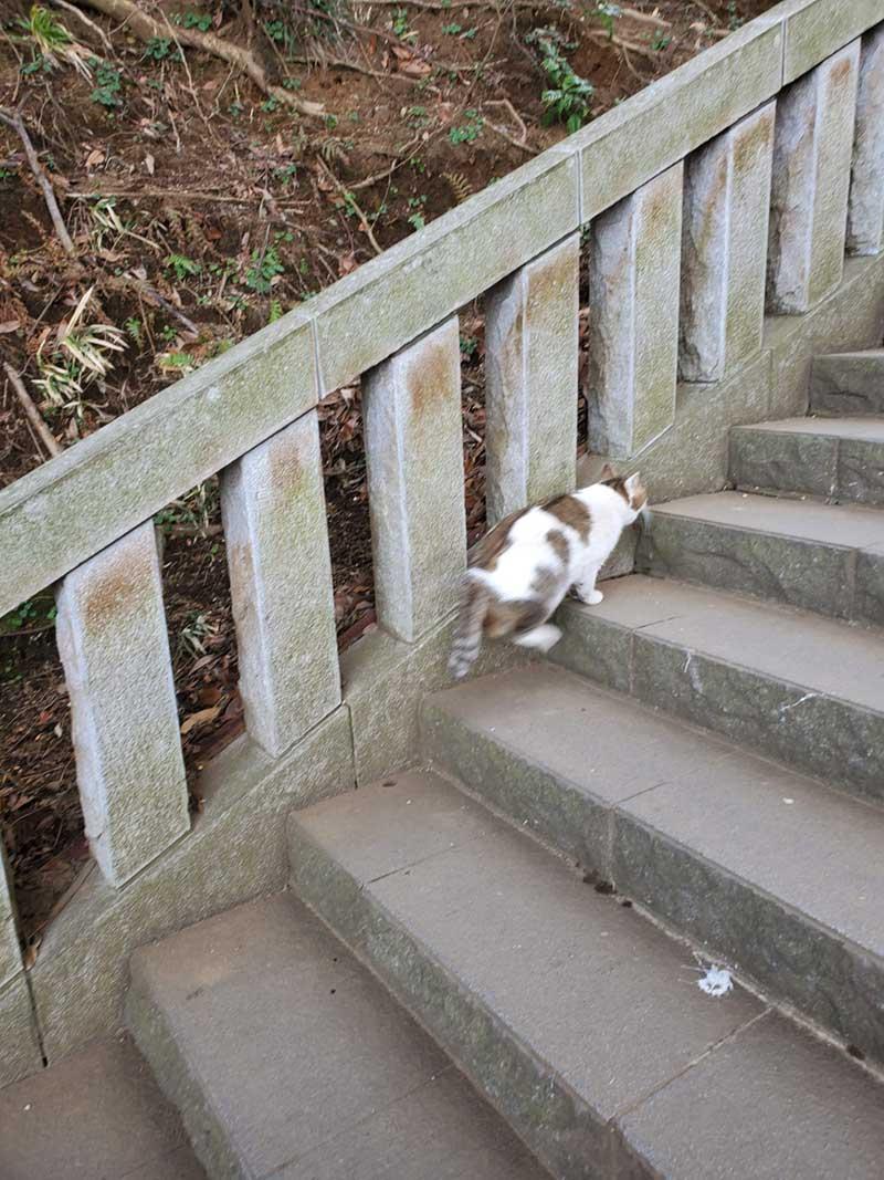 よこらせっと階段を上る猫