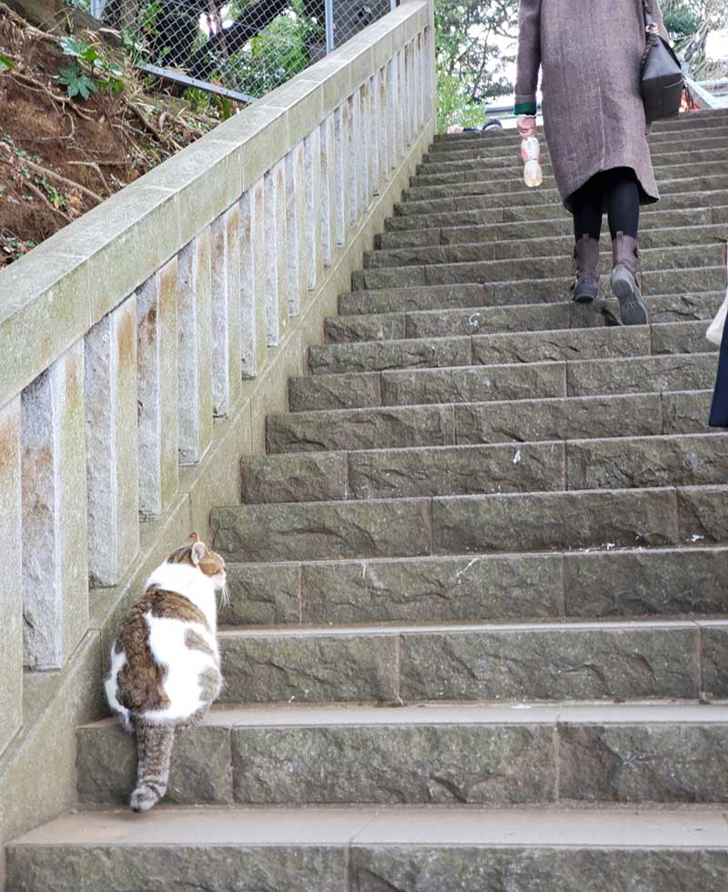 猫と一緒に中津宮へ