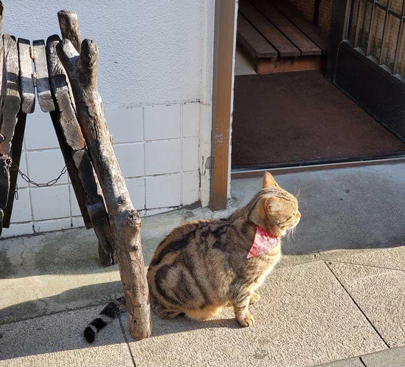猫が日向ぼっこ