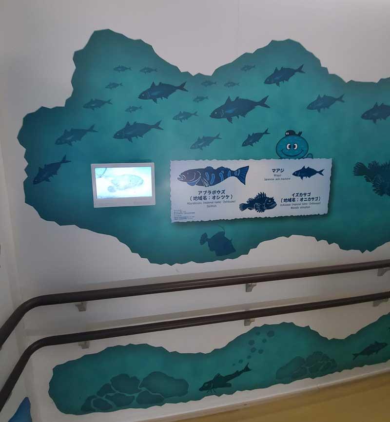 相模湾のお魚の紹介