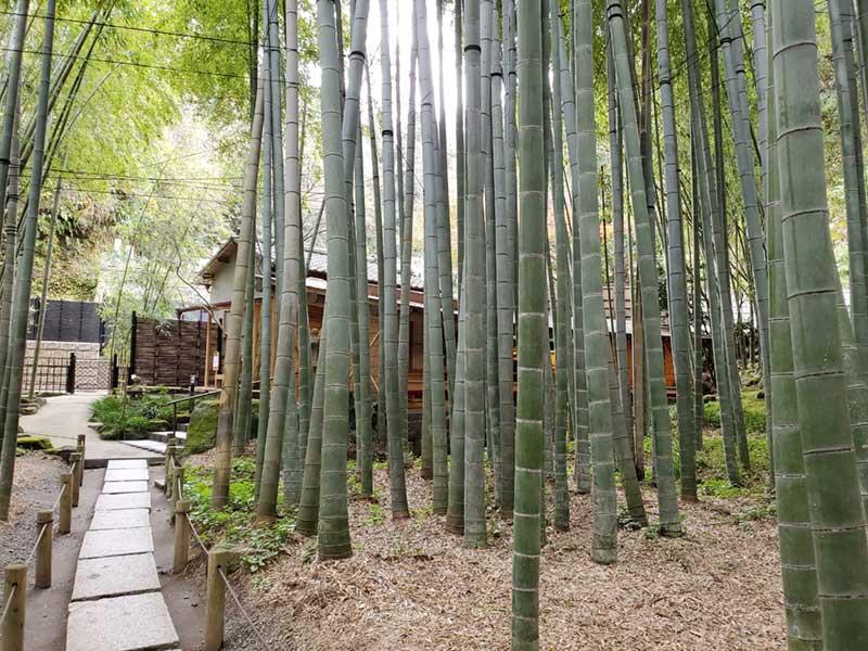 竹林にすっぽり覆われたカフェ