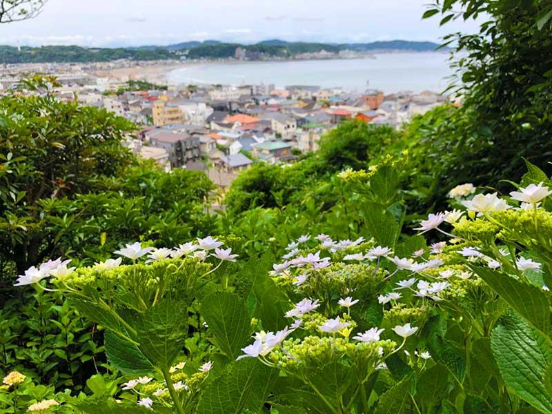 あじさい路の頂上からは鎌倉の海も見える