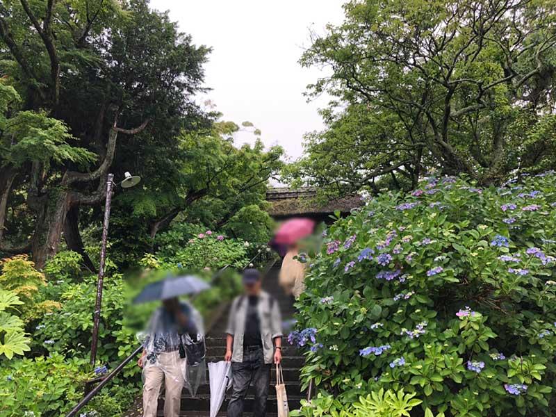 浄智寺の紫陽花の階段