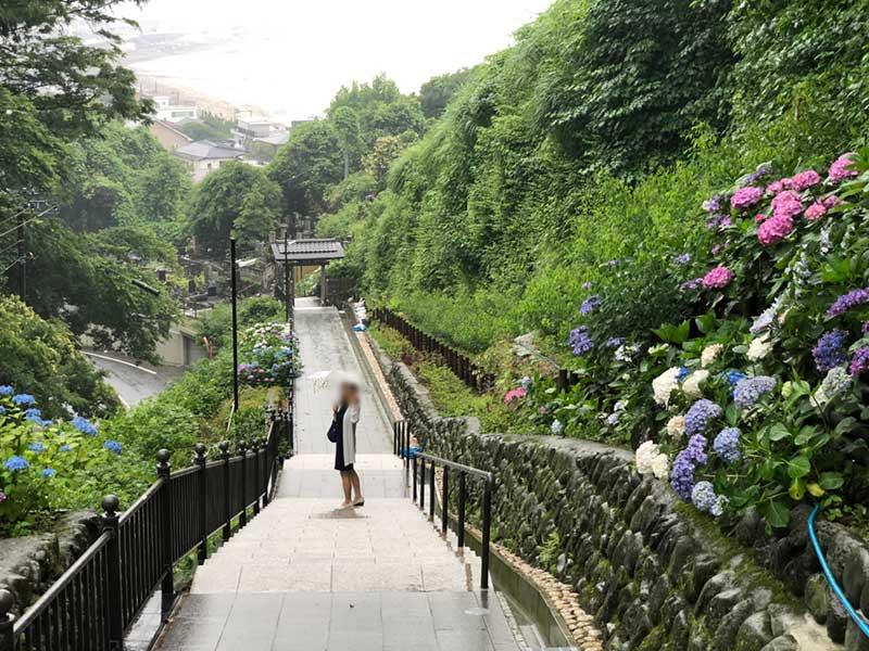 成就院の紫陽花の階段