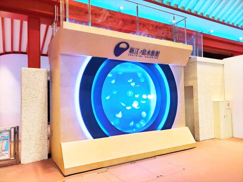 片瀬江ノ島駅の中にあるクラゲの水槽も必見!