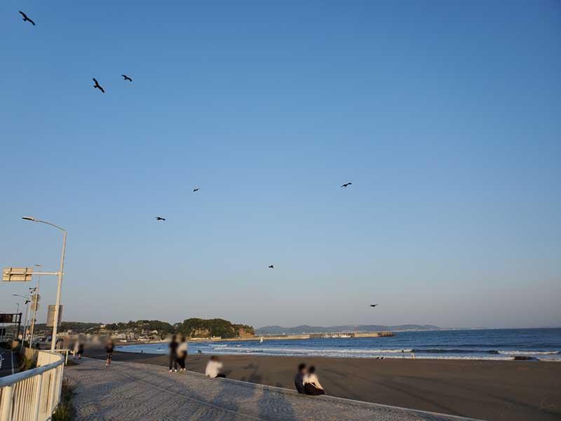 東浜は人よりもトンビがいっぱい