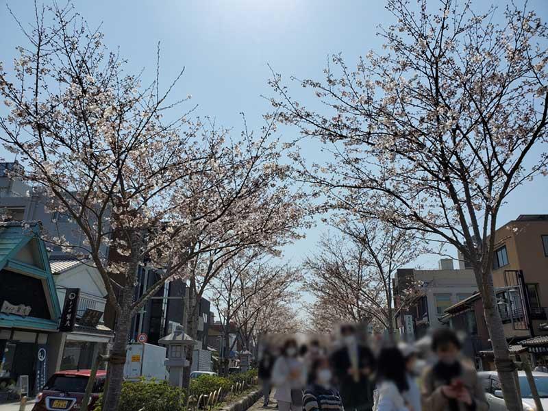 段葛の桜は少し散り気味