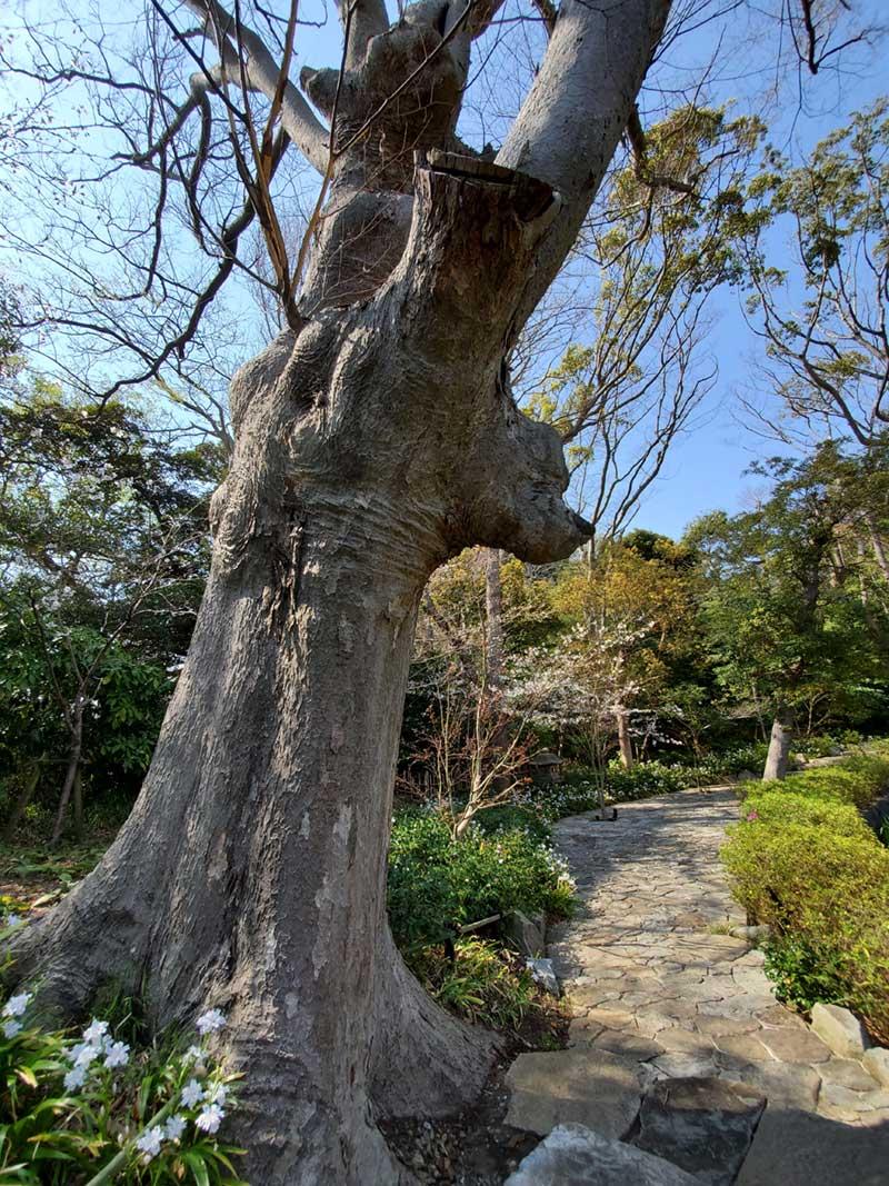 木からプーさんの顔が突き出ている