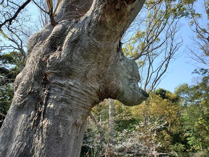 プーさんの木